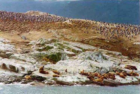 Tierre del Fuego wildlife