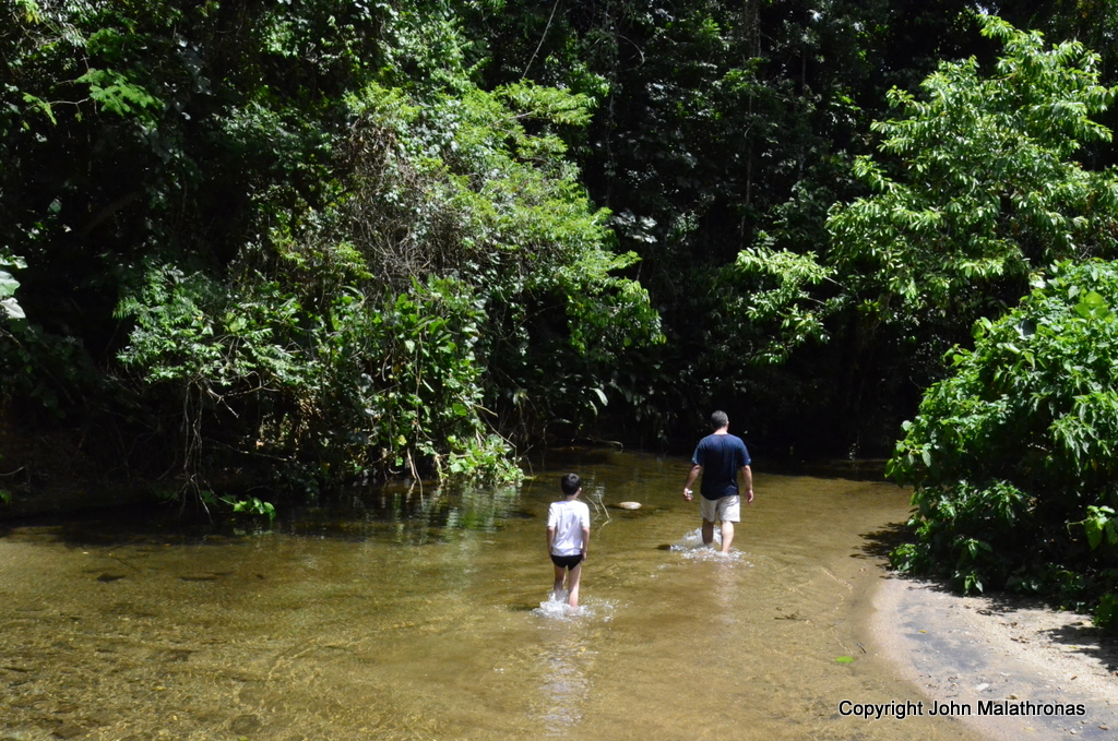 Trekking in the Ilhabela rainforest brazil