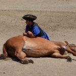 Csikós show: horse lying down