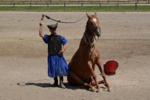 Csikós show: horse sitting like a dog