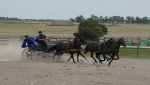 Csikós show: Carriage running