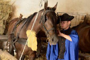 Kisber Felver, the Hungarian Half-blood horse