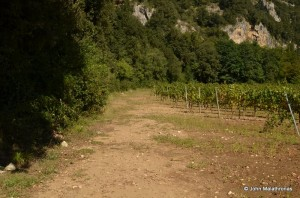 Path around the vineyards to the Chauvet cave