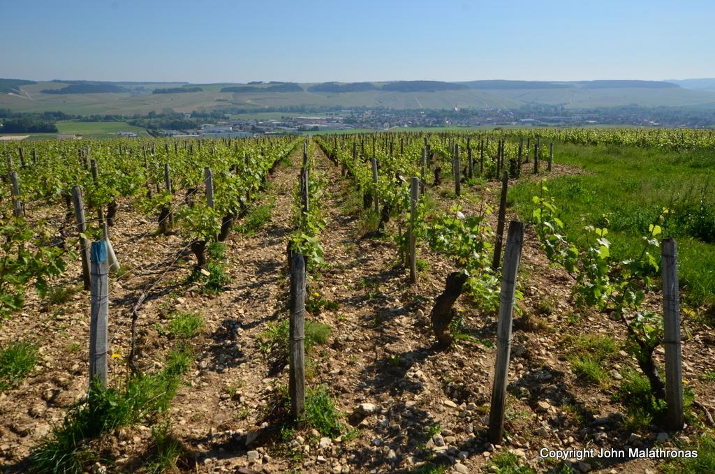 Chablis vineyards