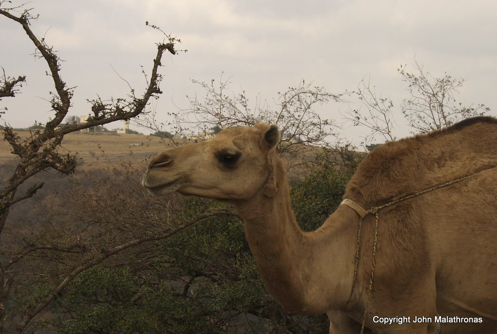 CAmel Oman