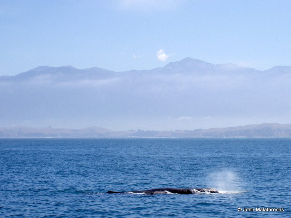 Sperm Whale water spout