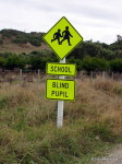 Blind Pupil sign, Chathams, New Zealand