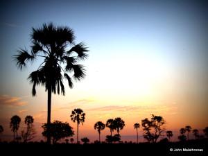 Sunset over fan palms in the Okavango Delta